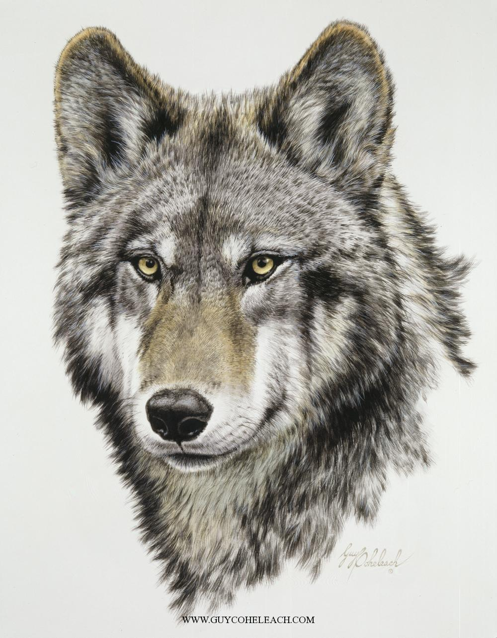 """Wolf Head, Timber""  -  22"" x 17"" ""Wolf Head, Timber"" - Canine  Wild Canine Paintings  Wolf and Fox Artwork"