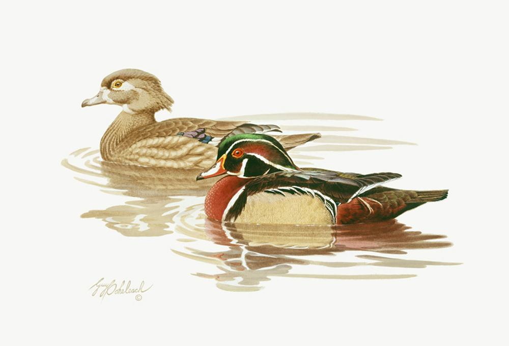 """Wood Ducks""  -  16"" x 20"" ""Wood Ducks"" - Water Birds  Waterfowl Paintings  Waterbird Paintings"