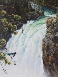 """YELLOWSTONE UPPER FALLS, BLACK BILLED MAGPIE "" 48"" x 36"" ""YELLOWSTONE UPPER FALLS, BLACK BILLED MAGPIE ""  Song Birds  Game Birds"