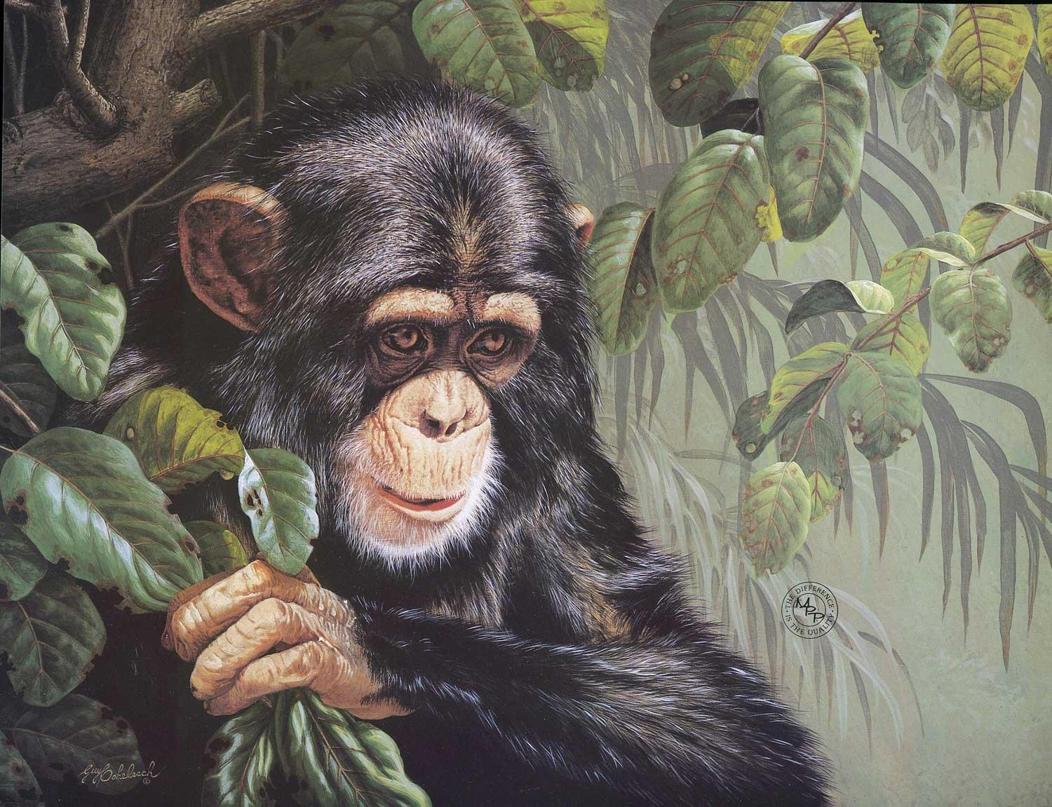 """""""Young Joe""""  -  18"""" x 22"""" """"Young Joe"""" - Critters  Small Game Paintings  Small Animals in Art"""