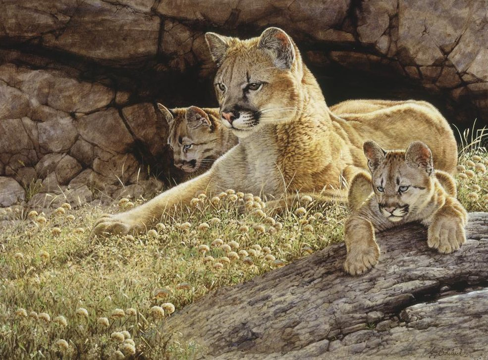 """""""Young Mother""""  - 30"""" x 40"""" """"Young Mother"""" - American Cats  American wild cats  Wild Felines of America"""