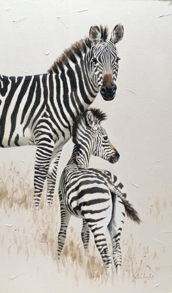 """Zebra Poster (Knoxville Zoo)"" <BR>25"" x 13"" ""Zebra Poster "" - African Game  African Game Paintings  Plains Game Art"