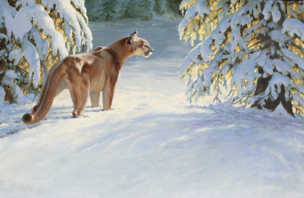 COLORADO MORNING PUMA 793 24 X 36 Oil on Linen